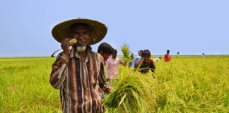 Farmer of Bangladesh (Photo-Symbolic)